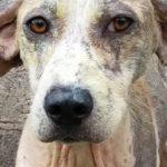 81806 Мужчина не смог пройти мимо истощенной собаки без шерсти, которая умирала на обочине
