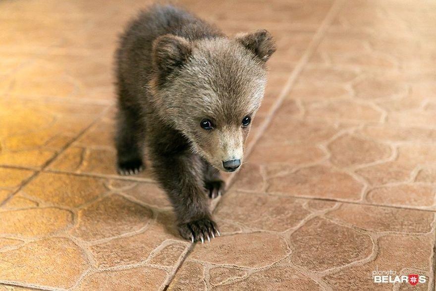 82606 Мужчина спас маленького медвежонка, который теперь живет у него на ферме