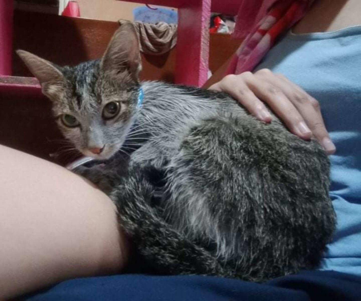 Возле мусорных баков девушка нашла бездомную грязную кошку. Ее накормили и отмыли, теперь эту красотку не узнать
