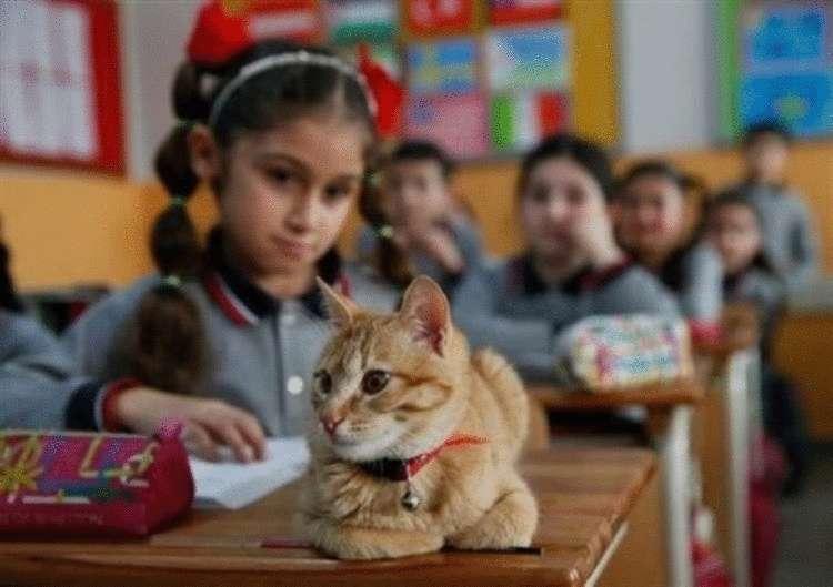 Ученик 3-го класса, кот Томбо устроил настоящую забастовку, когда его не пустили в школу
