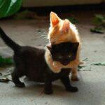 85123 25+ доказательств бесспорных талантов котов