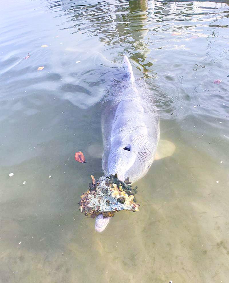 Дельфин приносит людям подарки со дна океана и меняет их на еду
