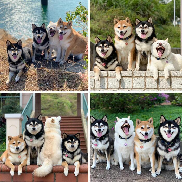 87280 Гарантия хорошего настроения: 12 фотографий самых милых и очень смешных собачек