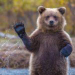 84781 Мужчина показал как изнутри выглядит берлога медведя