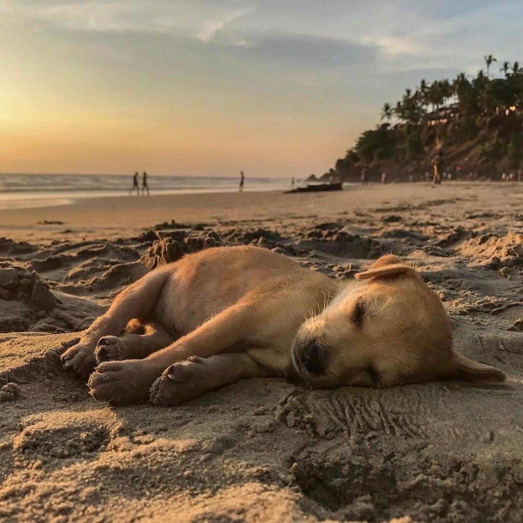 84592 Пара туристов рискнула и подобрала больного щенка в трущобах Индии