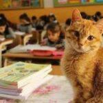 85633 Ученик 3-го класса, кот Томбо устроил настоящую забастовку, когда его не пустили в школу
