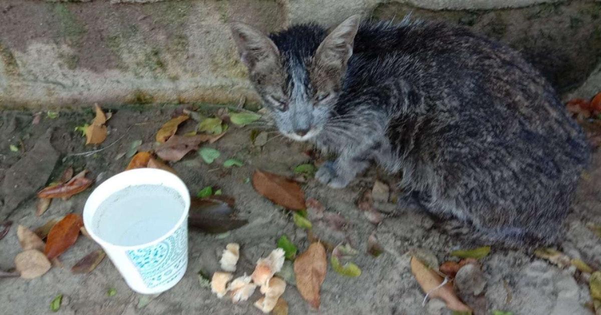 88567 Возле мусорных баков девушка нашла бездомную грязную кошку. Ее накормили и отмыли, теперь эту красотку не узнать