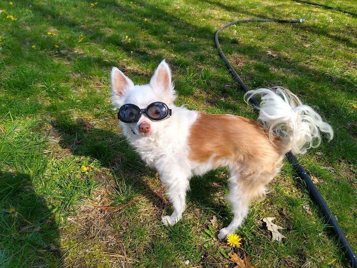 Гарантия хорошего настроения: 12 фотографий самых милых и очень смешных собачек