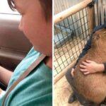 89601 10 фотографий, указывающих на то, что 99 % животного – это чистая любовь