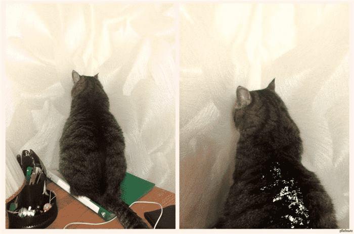 92452 12 примеров того, как выглядит настоящая кошачья обида