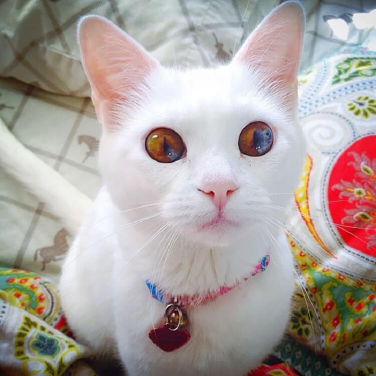 Топ 10 самых красивых кошек на планете Земля