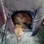 91697 Чтобы спасти раненого пса парень пошел в непроходимые горы
