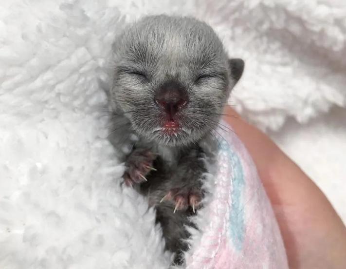 93522 Девушка нашла котенка с необычным окрасом и взялась выхаживать его вместе со своей кошкой