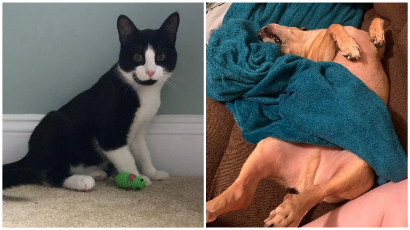 89940 Девушка подобрала несчастного кота на улице и уже через четыре недели поделилась его новым снимком. Животное не узнать!