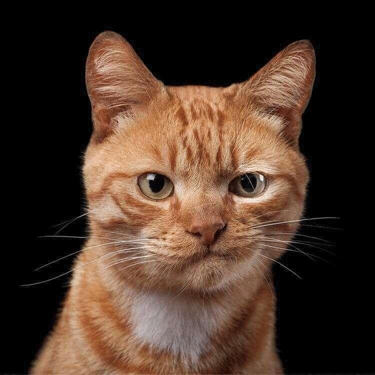 92105 Фотограф снимает примечательные портреты котов, подчеркивающие их личность