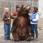 93375 Супружеская пара спасает медвежат-сирот и выхаживают их как собственных детей