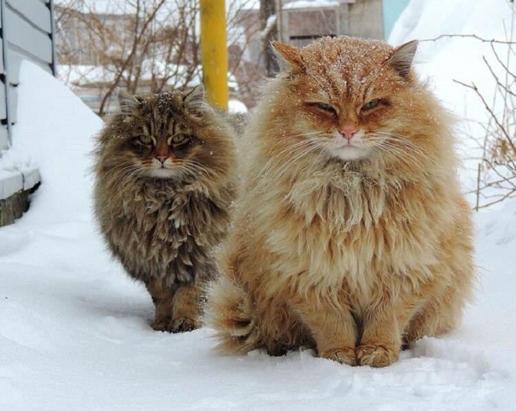 91324 Топ 10 самых красивых кошек на планете Земля