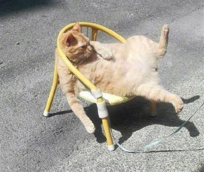 94019 13 смешных мини-историй в картинках про котиков