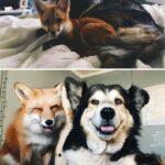 95429 30 трогательных фото «До и После» животных, которые выросли вместе