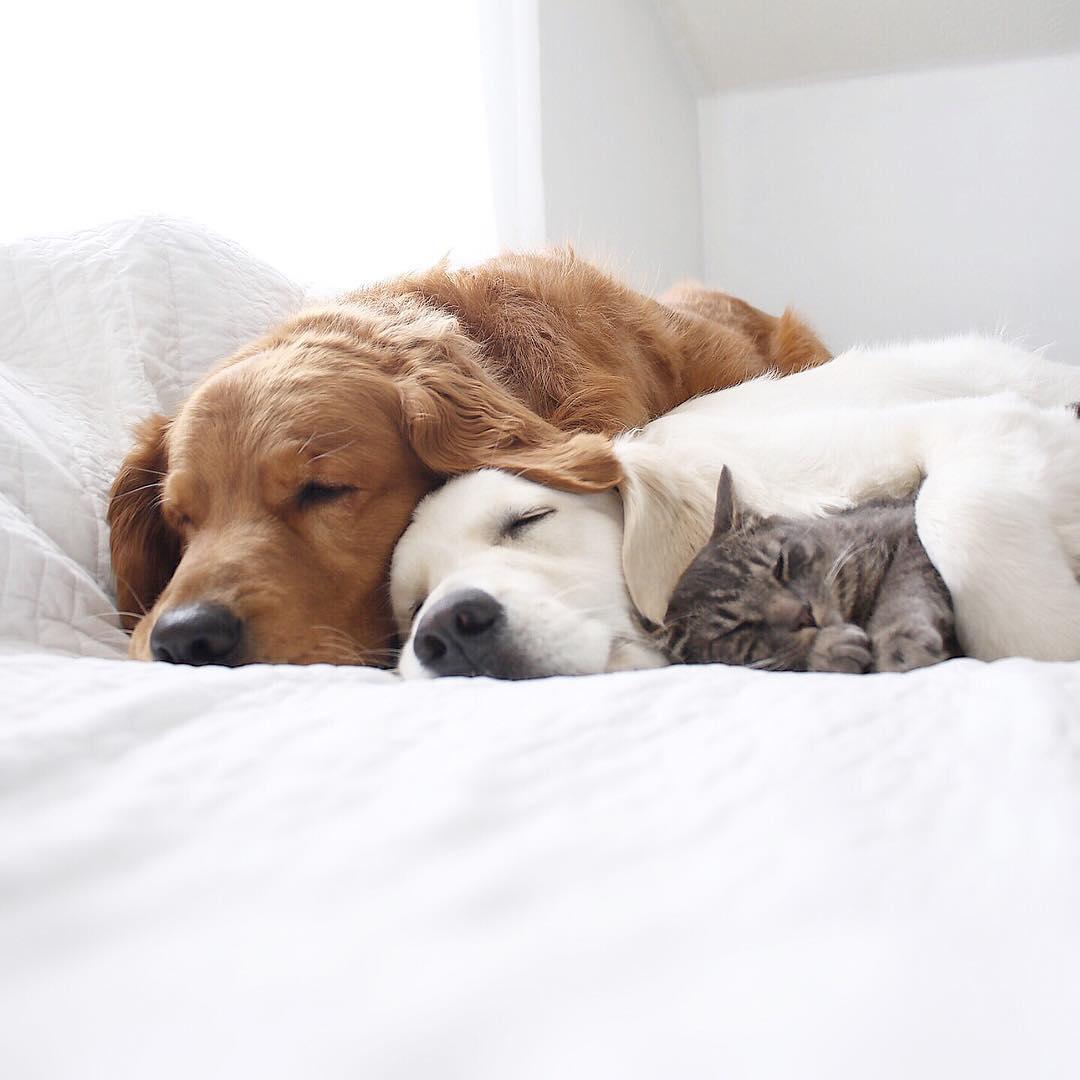 93838 Фотоистория о жизни с двумя собаками и котом