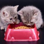 93721 Какой Royal Canin нужен вашей кошке? Помощь в подборе корма для котят и взрослых кошек