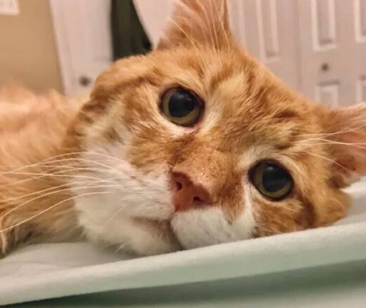 94747 Не зная, что хозяина уже нет среди живых, кот шел к его дому 8 лет
