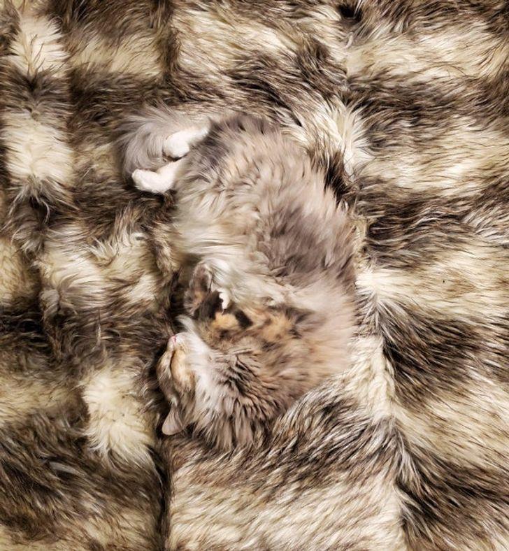 Домашние животные, которые буквально проявляют чудеса маскировки в доме