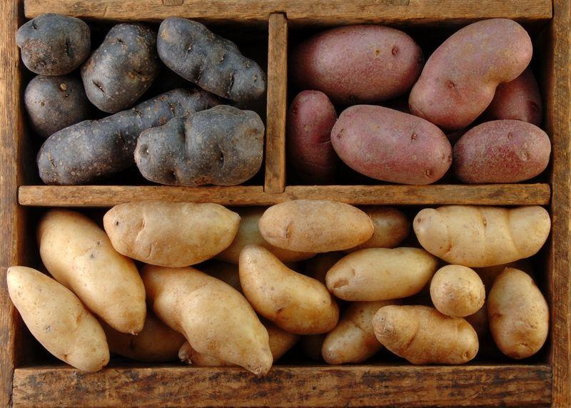 Разные сорта картошки