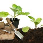 99841 Как вырастить дома рассаду капусты: залог успеха