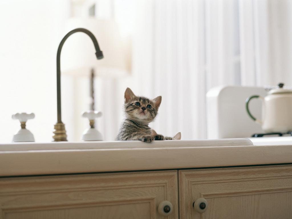купание котенка