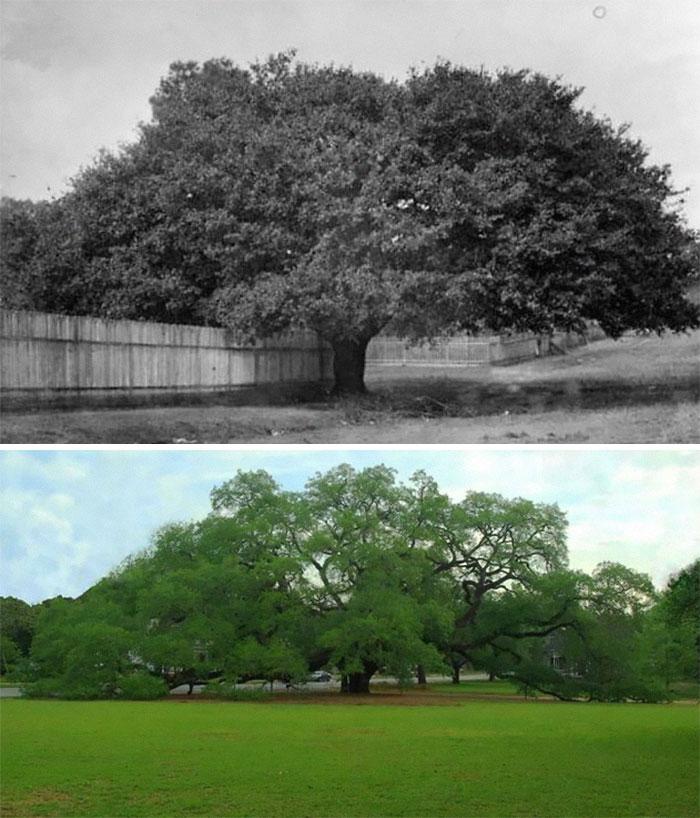 Время бежит и меняет все: 17 снимков из серии «было и стало» как иллюстрация неизбежного бега времени