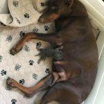 102022 Женщина подложила новорожденного котенка, кормящей собаке